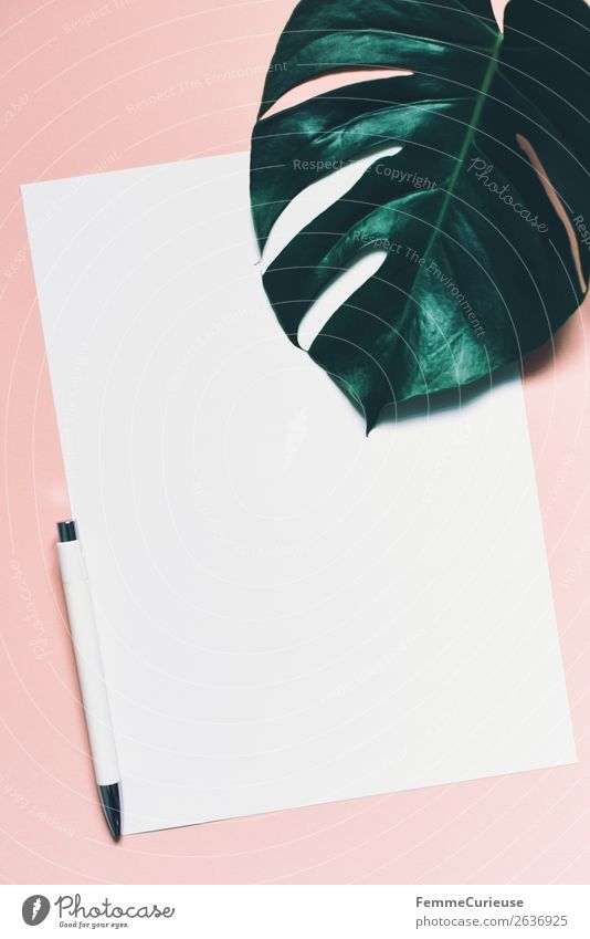 White sheet of paper & the leaf of a monstera on pink background Stationery Paper Piece of paper Communicate Ballpoint pen Monstera Leaf Plant Part of the plant