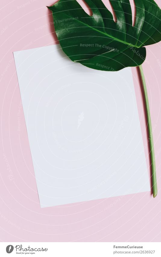 Paper & the leaf of a monstera on pink background Nature Stationery Piece of paper Creativity Design Monstera Plant Part of the plant Pink White Empty Write