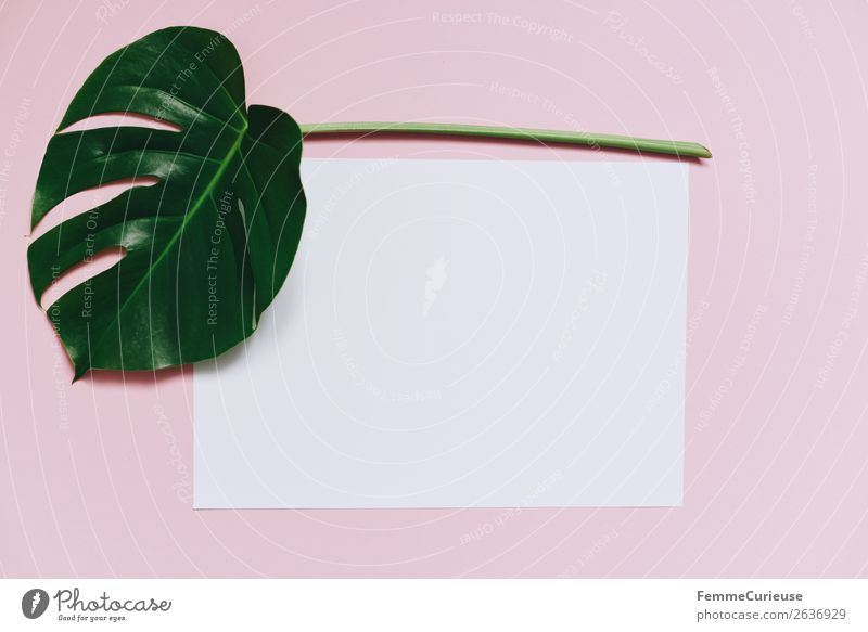 White sheet of paper & the leaf of a monstera on pink background Nature Creativity Monstera Leaf Plant Part of the plant Pink Pastel tone Paper Stationery Empty