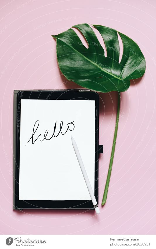 Green White Leaf Pink Design Decoration Characters Technology Creativity Future Internet Digital English Advancement Tablet computer Foliage plant