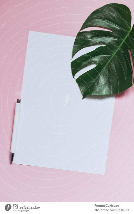 White sheet of paper & the leaf of a monstera on pink background Style Communicate Paper Stationery Ballpoint pen Monstera Leaf Plant Decoration Pink
