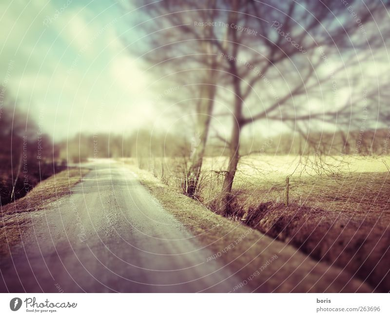 Ipweger Moor Landscape Winter Field Germany Europe Deserted Traffic infrastructure Lanes & trails Brown Yellow Gray Loneliness Colour photo Subdued colour Blur