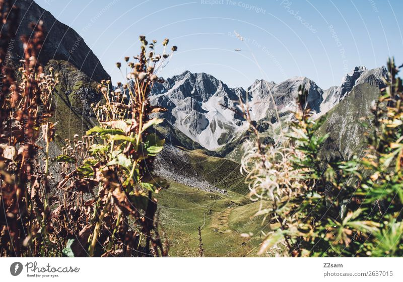 Lechtal Alps Adventure Hiking Environment Nature Landscape Summer Beautiful weather Bushes Mountain Sustainability Natural Green Loneliness Idyll