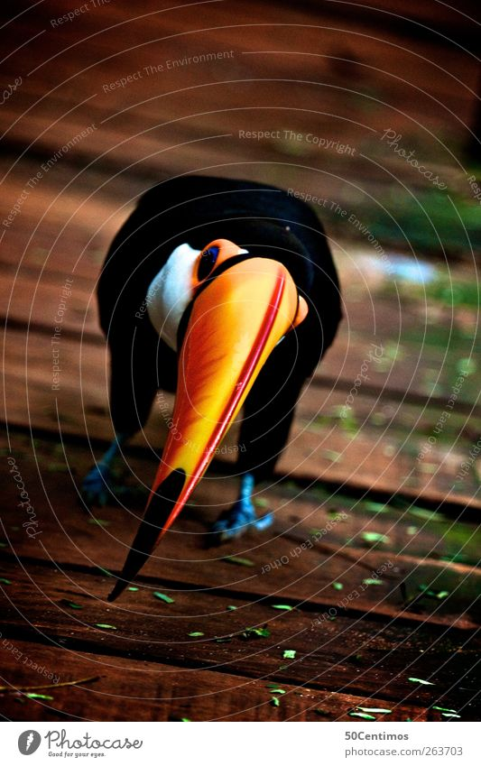 Nature Vacation & Travel Joy Animal Black Yellow Environment Wood Happy Brown Bird Wait Wild animal Beginning Study Threat