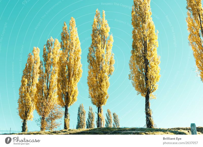 Vacation & Travel Nature Landscape Tree Relaxation Autumn Yellow Natural Bright Park Esthetic Blossoming Seasons Switzerland Row Blue sky