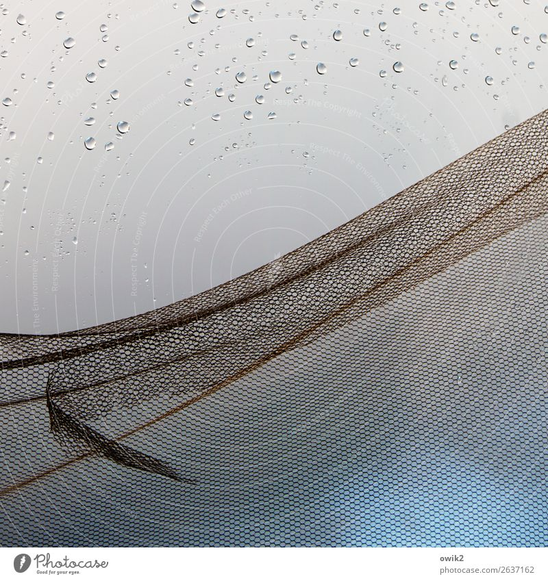 dragnet Drops of water Rain Window Gauze Net Glass Metal Old Near Wet Blue Turquoise Fly screen Broken Torn Abrasion Colour photo Close-up Detail Abstract