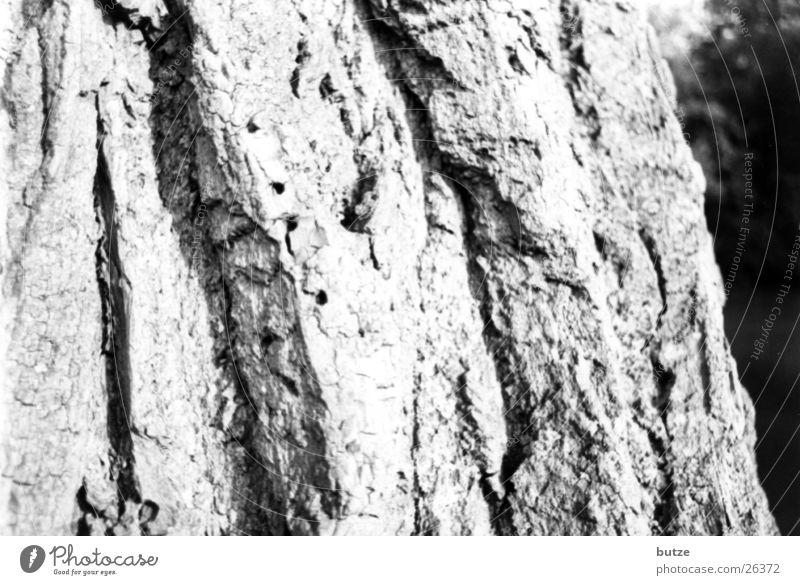 tree bark Tree Tree bark Oak tree Black & white photo