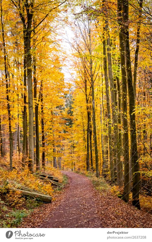 Autumn trail in yellow forest Vacation & Travel Tourism Trip Adventure Far-off places Freedom Expedition Camping Mountain Hiking Environment Nature Landscape