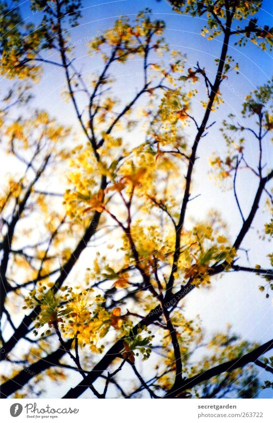 Nature Blue Tree Plant Yellow Wood Spring Esthetic Illuminate Bushes Beautiful weather Blossoming Fragrance Positive Cloudless sky Twigs and branches