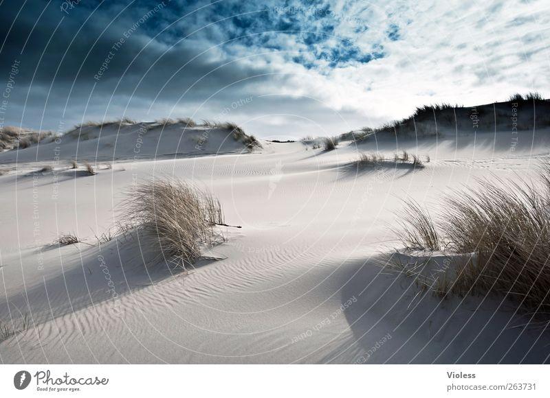 déjà vu Nature Landscape Sand Sky Clouds Beach North Sea Island Discover Relaxation Spiekeroog Marram grass Back-light Colour photo Exterior shot Day Light