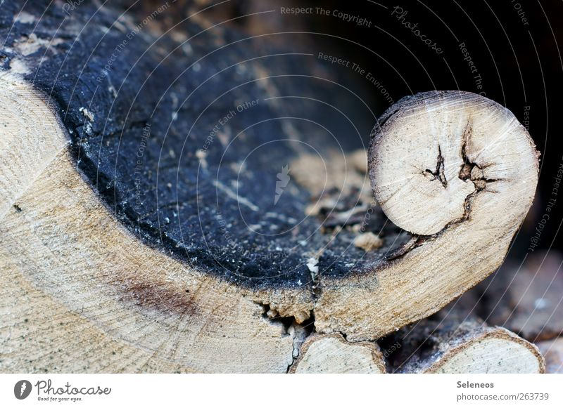 where planing takes place Environment Nature Plant Wood Natural Tree trunk Tree bark Distorted Colour photo Exterior shot Close-up Detail Abstract Pattern