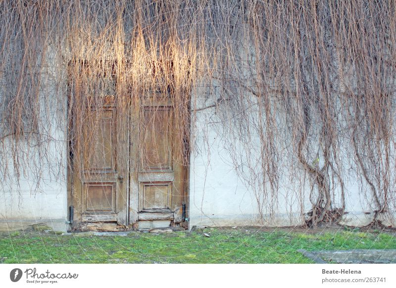 Old White Green House (Residential Structure) Wall (building) Emotions Wall (barrier) Brown Door Esthetic Uniqueness Decline Shriveled Ivy Wall plant Wooden door