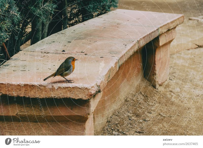 Close-up of a small bird on a stone bench Garden Financial institution Singer Nature Animal Tree Park Forest Rock Bird Stone Small Cute Wild Brown Red Colour