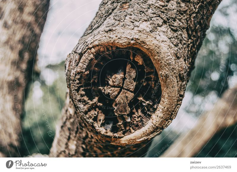 Close-up of a wound on the trunk of a scarred tree Nature Old Plant Tree Forest Wood Natural Brown Growth Skin Vegetable Protection Pine Consistency Wound Rough