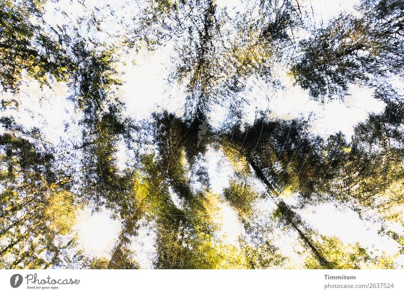 View to treetops Environment Nature Plant Sky Autumn Tree Forest Rotate Natural Blue Yellow Green Emotions Life Double exposure Tree trunk Leaf Deciduous tree