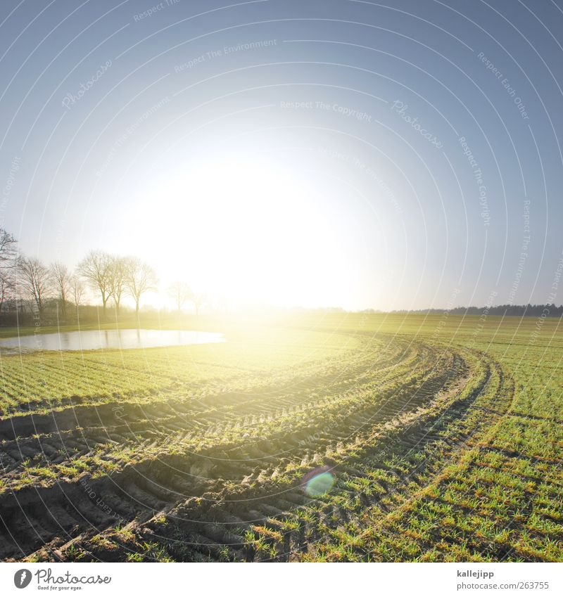 Trace of light Illuminate Agriculture Field Sunlight Furrow Tractor track Tree Lake Puddle Lanes & trails Curve Sunrise Economy Fertile Growth Growth-enhancing
