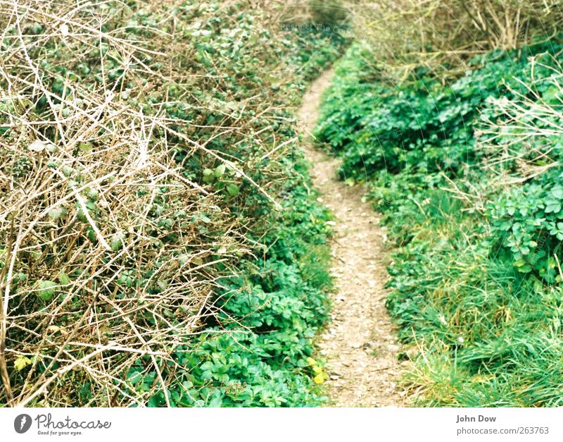 Nature Environment Grass Lanes & trails Bushes Footpath Narrow Uninhabited Rural Lost Wiggly line Audacious Ethnic Hillbilly