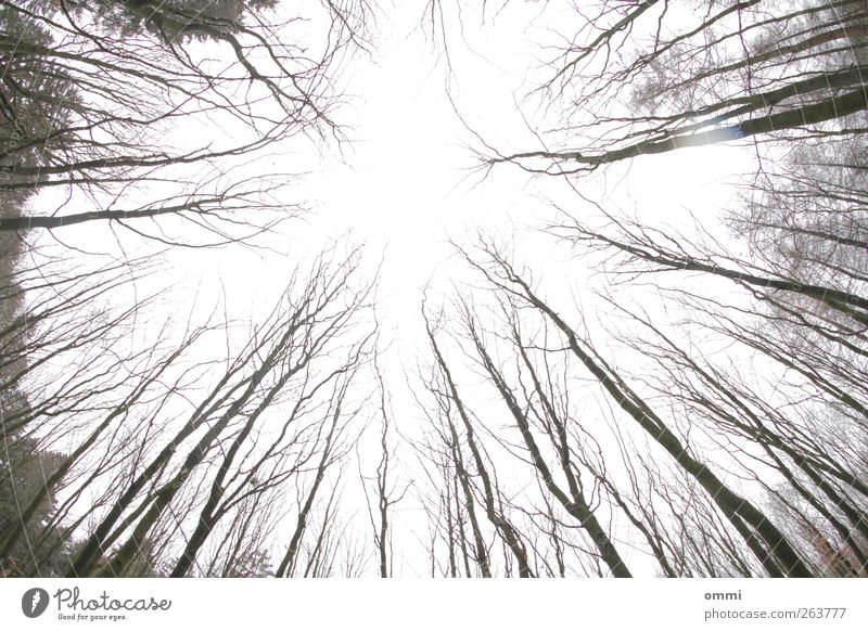 dismayed Sky Tree Forest Bright Tall Cold Branch Tree trunk Leafless Bleak Exterior shot Deserted Copy Space middle Day Silhouette Wide angle Fisheye Skyward