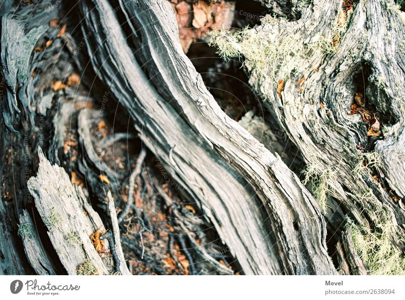 Nature Plant Tree Animal Leaf Forest Mountain Wood Environment Blossom Meadow Grass Stone Sand Earth Adventure