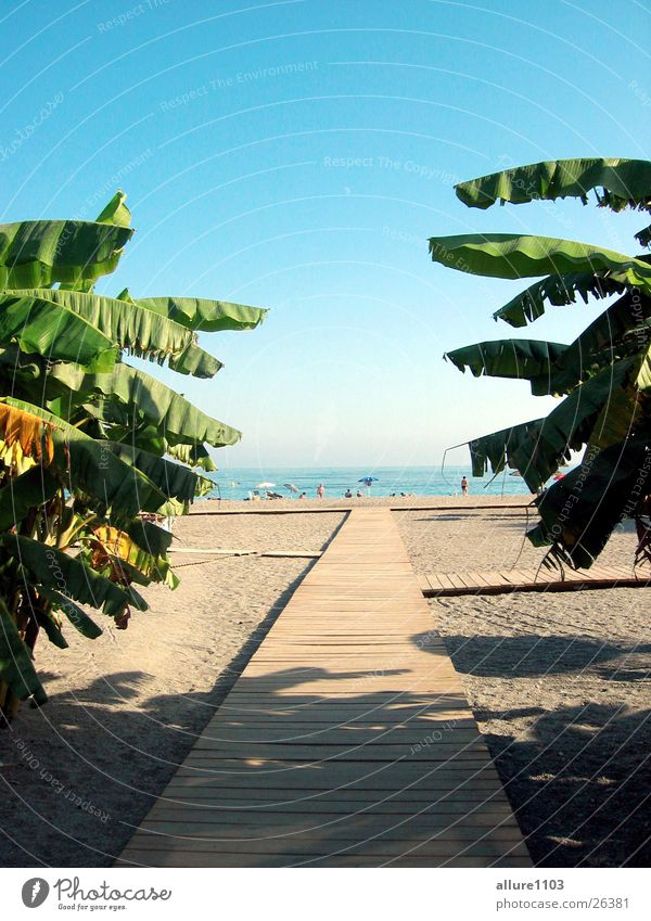 Ocean Beach Vacation & Travel Europe Swimming & Bathing Bay Spain Palm tree Paradise Marbella