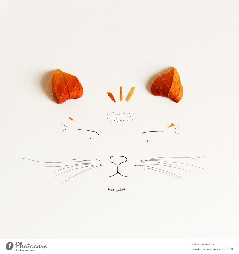 cat Leisure and hobbies Handicraft Draw Nature Plant Animal Autumn Blossom Physalis Wild animal Cat 1 Paper Decoration Smiling Dream Happiness Happy Natural