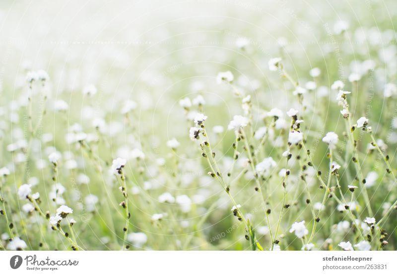 Nature White Green Plant Flower Relaxation Environment Meadow Spring Garden Blossoming Joie de vivre (Vitality) Fragrance Spring fever Wild plant
