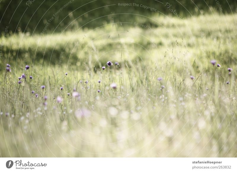 Nature Green Plant Flower Environment Meadow Spring Hiking Beautiful weather Violet Blossoming Joie de vivre (Vitality) Harmonious Spring fever