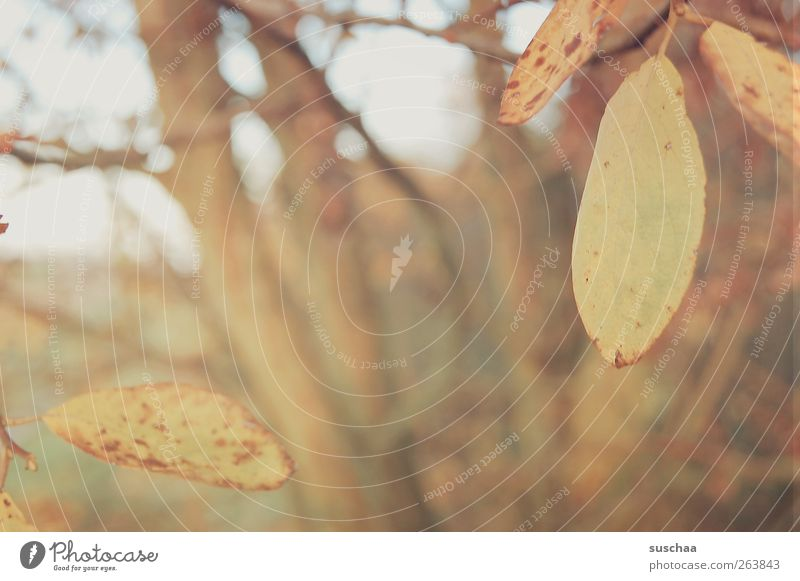rest day Environment Nature Landscape Autumn Climate Tree Leaf Field Wood Idyll Change Tree trunk Branch Seasons Blur Exterior shot Deserted Day Twilight