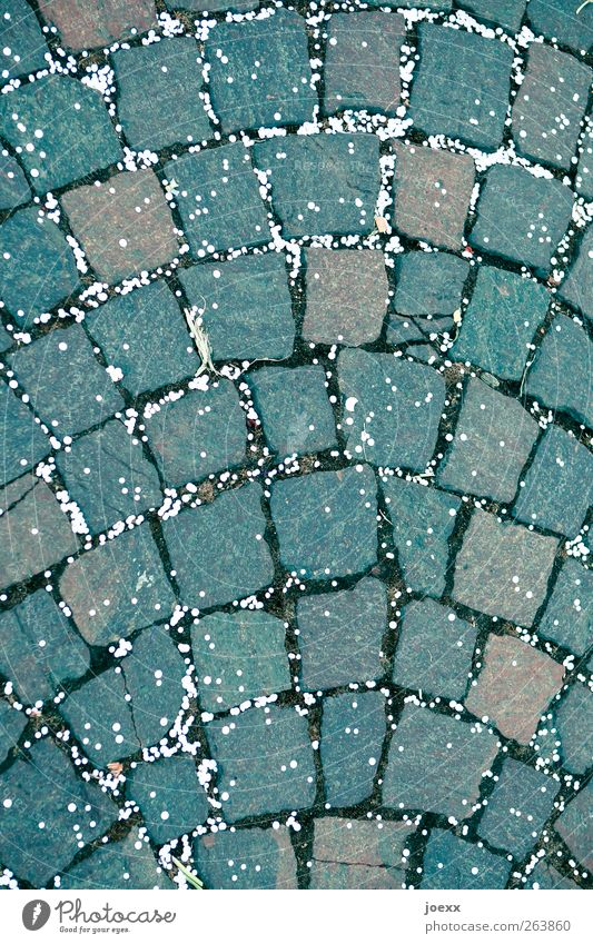 points distribution Street Stone Brown Gray White Confetti Cobblestones Paving stone Colour photo Exterior shot Deserted Day Wide angle Lie