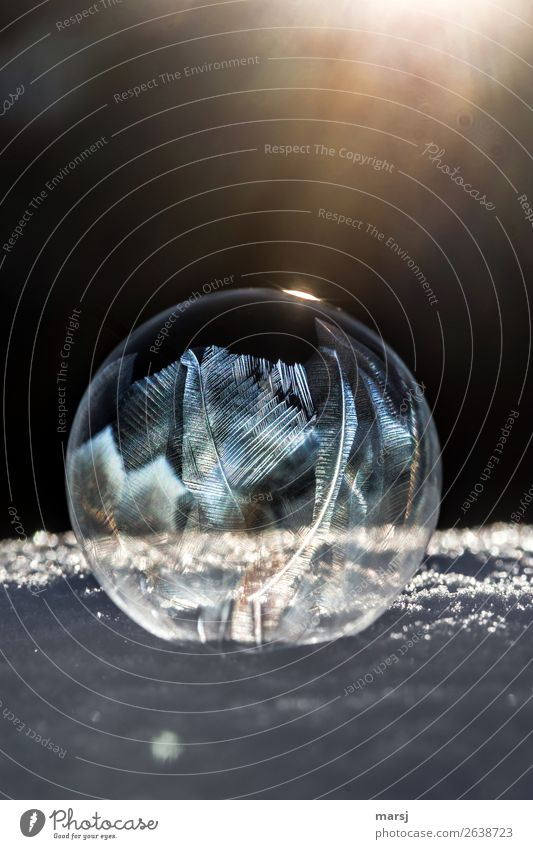 888 | Transformation | into a work of art Harmonious Meditation Art Winter Ice Frost Snow Soap bubble Illuminate Exceptional Dark Thin Authentic Success