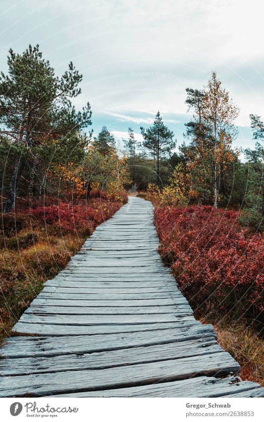 autumn paths Nature Landscape Plant Animal Sky Clouds Autumn Weather Tree Bushes Forest Yellow Green Red Rhön Bog Woodway biosphere reserve Colour photo