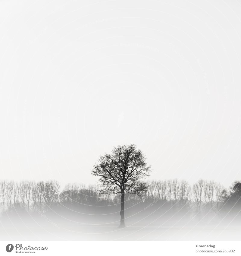 no symmetry! Environment Nature Landscape Plant Winter Fog Ice Frost Tree Meadow Forest Thin Elegant Bright Cold Black White Emotions Moody Might Romance Calm