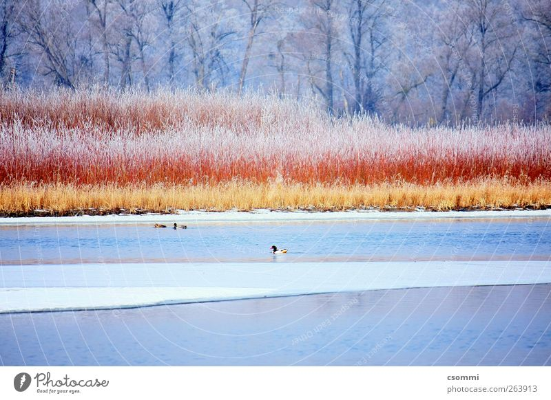 Cinnamon & Sugar Water Winter Bushes Forest Lakeside River bank Island Brook Duck Goose Secrecy Beautiful Longing Wanderlust Loneliness Esthetic Discover Peace