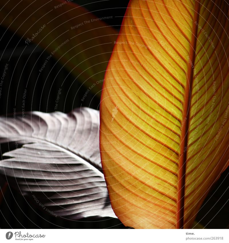 Lifelines #41 Plant Foliage plant Esthetic Relationship Elegant Relaxation Exotic Contentment Concentrate Ease Moody Transience Change Limp Parallel Rachis