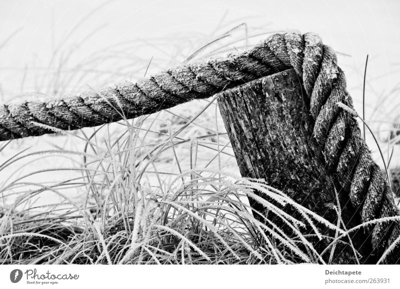 Cold Still Nature Water Winter Ice Frost Grass Coast North Sea Baltic Sea Rope Wood String Old Firm Black White Calm Unwavering Moody Black & white photo