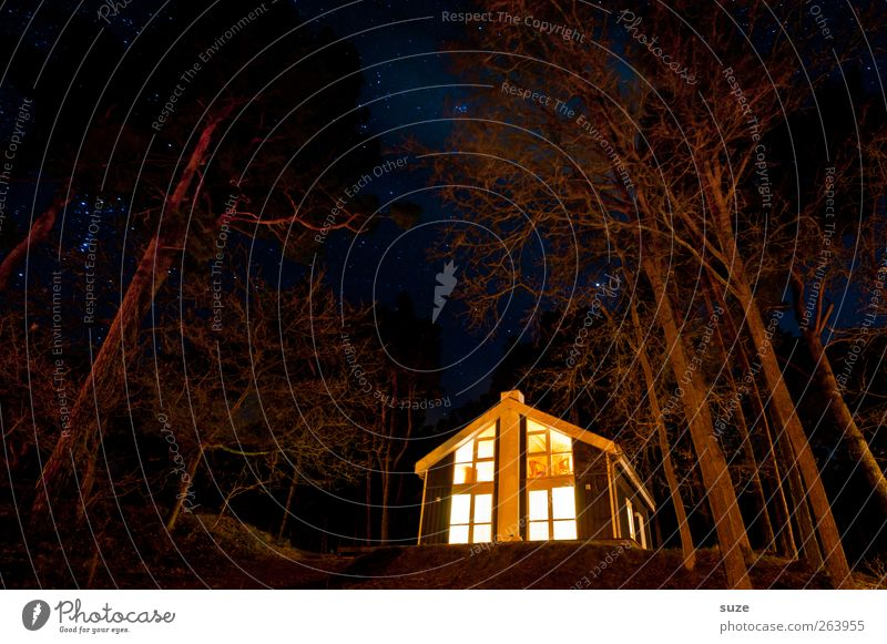 witch Vacation & Travel Adventure House (Residential Structure) Feasts & Celebrations Hallowe'en Environment Nature Landscape Elements Night sky Stars Tree