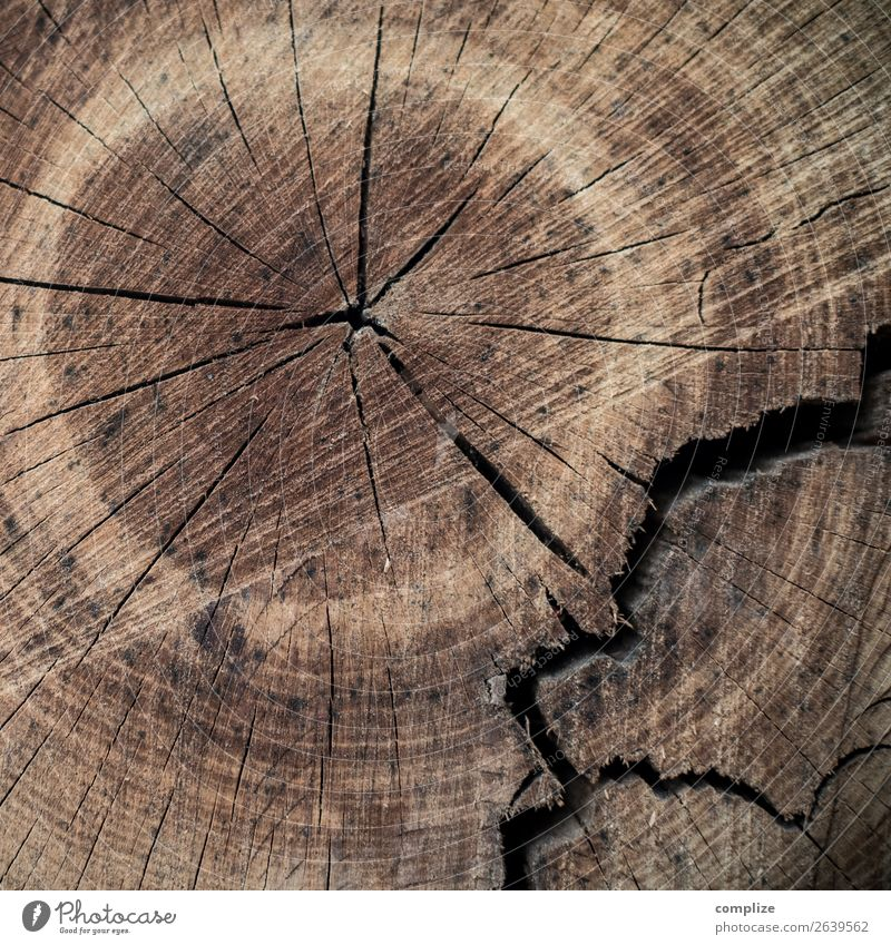 Tree annual rings, broken Healthy Health care Alternative medicine Life Wood Future Senior citizen Annual ring Resume Broken Fate Old Ring Background picture