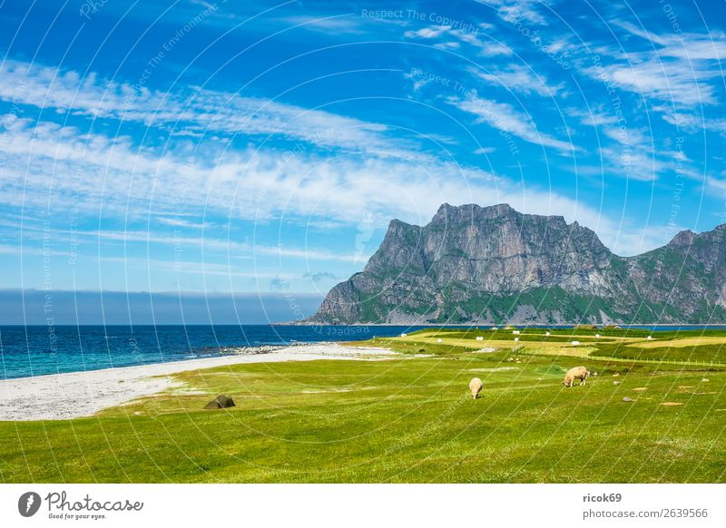 Utakleiv Beach on the Lofoten in Norway Vacation & Travel Summer Ocean Mountain Agriculture Forestry Environment Nature Landscape Water Clouds Grass Meadow Rock