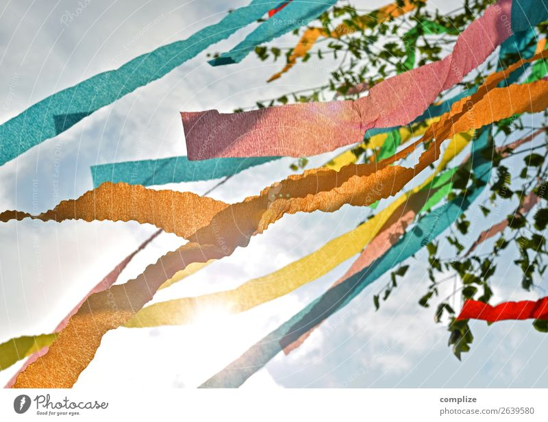maypole Sun Party Feasts & Celebrations May May 1 Nature Wind Tree Leaf Flag Happiness Multicoloured May tree Birch tree Branch Twig Snippets Spring