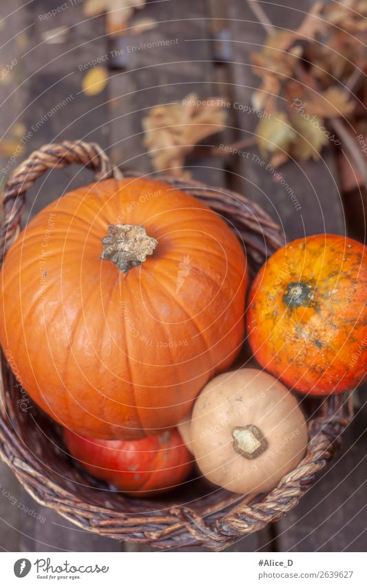 Pumpkin basket in daylight Food Vegetable Nutrition Basket Healthy Eating Thanksgiving Hallowe'en Nature Autumn Agricultural crop Wood Authentic Fresh Delicious