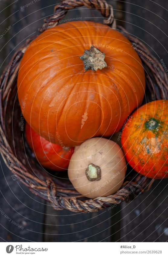 Pumpkins in basket vintage Food Vegetable Nutrition Organic produce Fasting Basket Thanksgiving Hallowe'en Nature Autumn Plant Agricultural crop Authentic Fresh