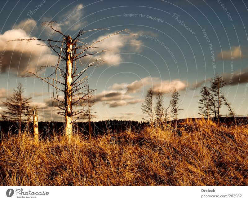 Nature Blue Tree Environment Landscape Brown Wild Climate Europe Bushes Gloomy Hill Dry Drought Thorny Scotland