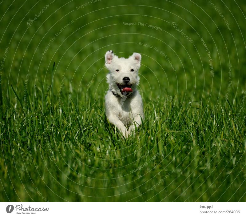Dog Nature White Green Plant Sun Summer Joy Animal Meadow Grass Jump Happy Baby animal Healthy Contentment