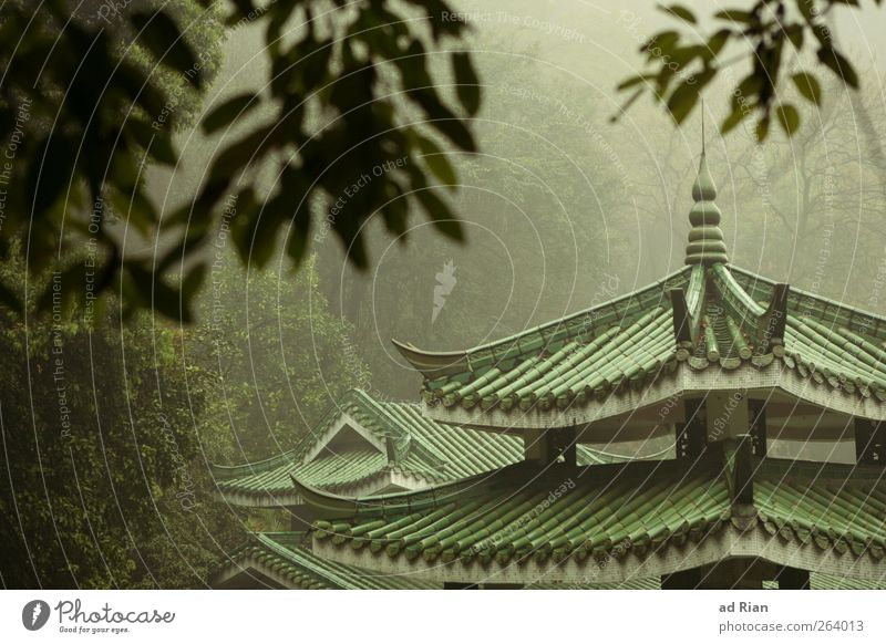 Nature Tree Plant Autumn Architecture Moody Park Rain Fog Bushes Roof Hill Manmade structures Skyline China Tourist Attraction