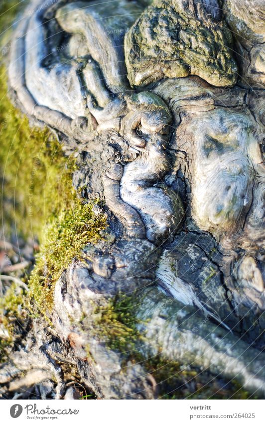 Nature Old Green Tree Death Exceptional Discover Bizarre Moss Root Woodground Landscape Mythical creature Enchanted forest Dream world Fairytale landscape