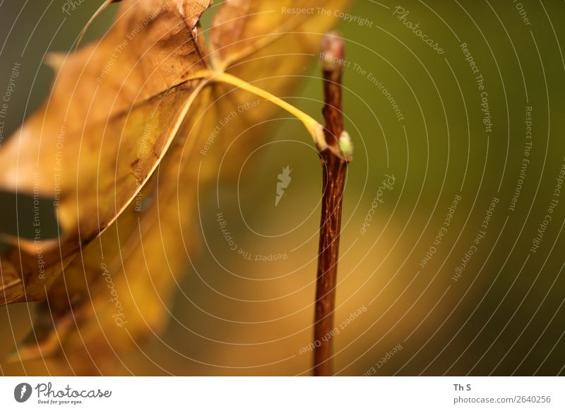 Nature Plant Green Leaf Calm Winter Autumn Yellow Natural Movement Brown Free Elegant Esthetic Authentic Uniqueness