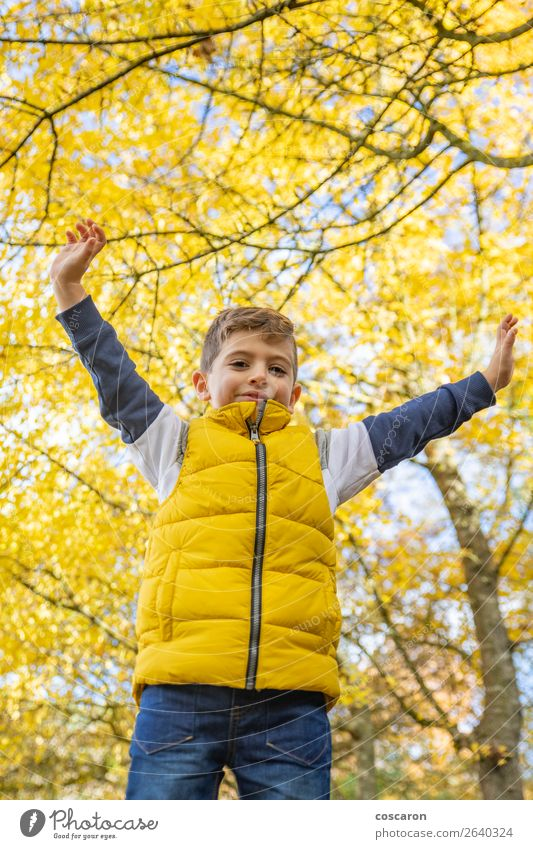 Cute kid against a yellow tree in autumn Child Human being Vacation & Travel Nature Man Plant Colour Beautiful Landscape Tree Leaf Joy Forest Winter Lifestyle