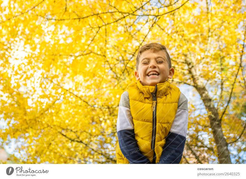 Cute kid against a yellow tree in autumn Child Human being Nature Man Colour Beautiful Landscape Tree Leaf Joy Forest Winter Lifestyle Adults Autumn Yellow