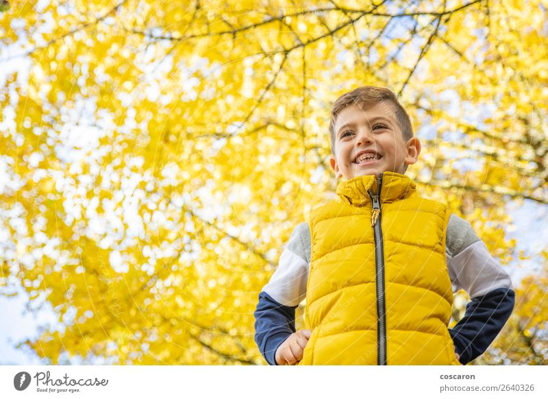 Cute kid against a yellow tree in autumn Child Human being Nature Man Plant Colour Beautiful Landscape Sun Tree Leaf Joy Forest Winter Lifestyle Adults