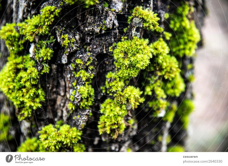 Close up of a moss in a trunk Design Beautiful Life Summer Wallpaper Environment Nature Plant Tree Flower Grass Moss Leaf Forest Old Growth Fresh Wet Natural